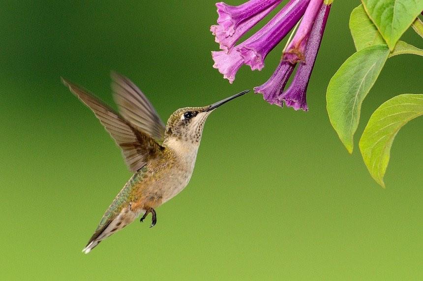 colibri seo semantica